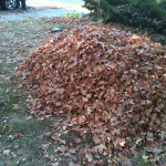 Leaves Are Fun