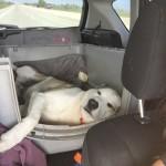 Road Trip: Tango's Car Sleeping Positions…