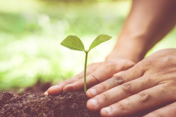 growing tree / Love nature